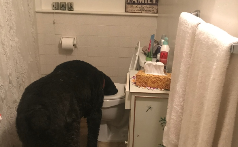 Step Away From TheToilet